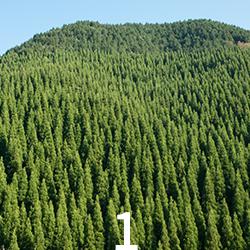 林業のやりがい1画像