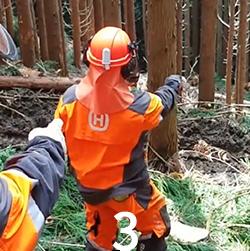林業のやりがい3画像