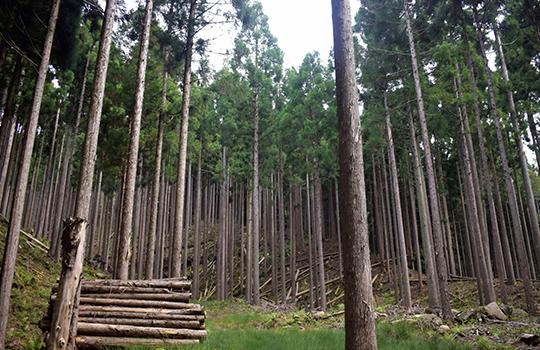 造林・育林画像