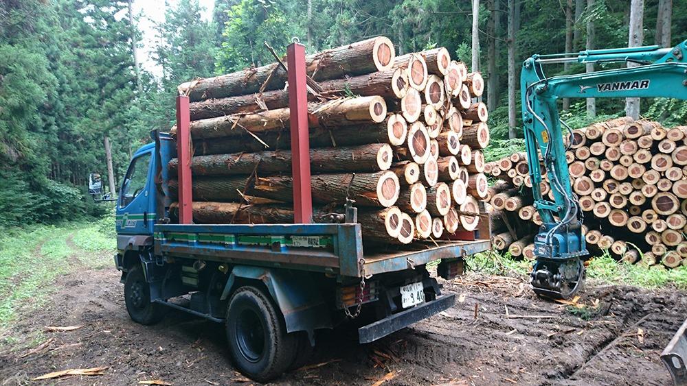伐採作業画像