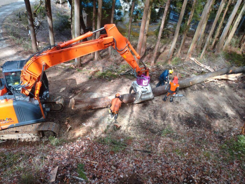 立木の伐採のポイントと注意点について